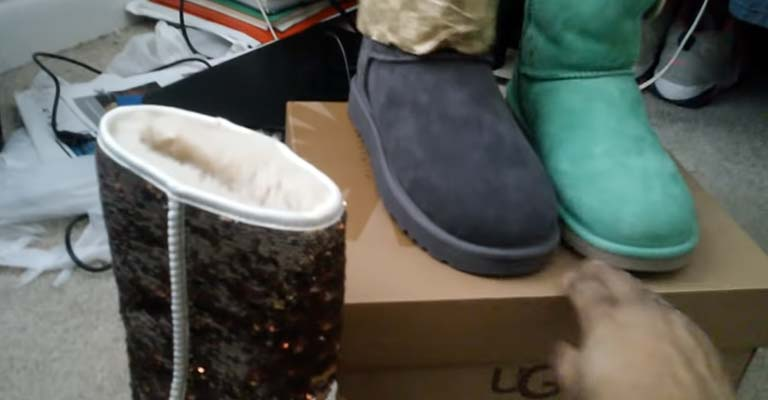 Why Are Uggs So Expensive than Bearpaws